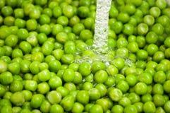 Peas washing Stock Photos