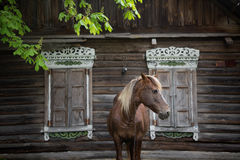 Peasant bay horse is grazed near a old rustic log farmhouse Royalty Free Stock Image