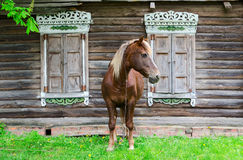 Peasant bay horse stands near old rustic log farmhouse Royalty Free Stock Photos