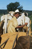 Peasant in Brazilian northeast, Brazil. Stock Image