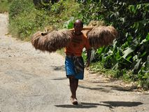 Peasant carrying rice sheaves. Indonesian peasant carrying rice sheaves on shoulder pole. Tana Toraja region in South Sulawesi stock image