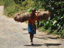 Peasant carrying rice sheaves Stock Image