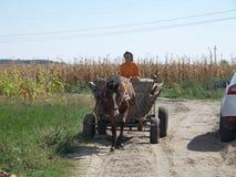 Peasant in cart Stock Image