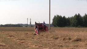 Peasant farm worker harvest wheat plants with small combine stock video