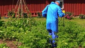 Peasant farmer man spray potato plants with pesticide Stock Images