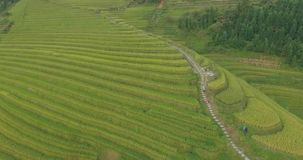 Peasant Going Along Longji Rice Terraced Fields. Beautiful epic shot of elderly Asian male peasant farmer in traditional Chinese hat bear beam bamboo sticks stock video