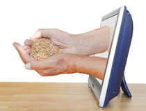 Peasant handful with grains leads out TV Stock Photos