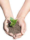 Peasant hands with soil and green sprout Stock Photos