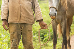 Peasant holding a horse in Vinales, Cuba Stock Image