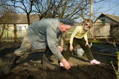 Peasant in kitchen garden Royalty Free Stock Image