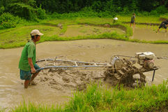 Peasant in the rice field Stock Images