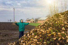 Peasant with sugar beet Stock Photos