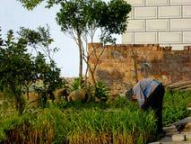 Peasant woman doing farm work in the farm garden Royalty Free Stock Photos