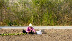 Peasant woman doing farm work in the field Royalty Free Stock Photos