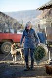 Peasant woman feeding animals Royalty Free Stock Image