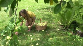 Peasant woman girl carry basket full of fruits and collect apples under tree. 4K stock video
