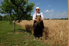 Peasant woman harvesting wheat with scythe Royalty Free Stock Images