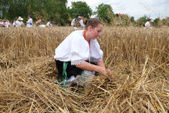 Peasant woman harvesting wheat