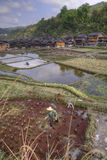 Peasant working in rice paddies  near chinese ethnic minorities Royalty Free Stock Photo