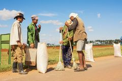 Peasants collect the rice after drying it on the asphalt. Cienfuegos, Cuba - December 7, 2017: Peasants collect the rice after drying it on the asphalt Stock Images