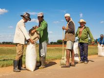 Peasants collect the rice after drying it on the asphalt. Cienfuegos, Cuba - December 7, 2017: Peasants collect the rice after drying it on the asphalt stock photography