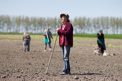 Peasants hoeing on farmland Royalty Free Stock Photography