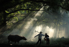 Peasants in morning sunlight. Early in the morning peasants go to the field .The sunlight throws upon them through leaves of an old tree Stock Photography