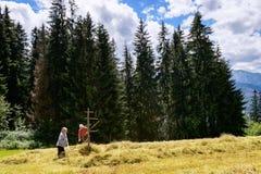 Peasants preparing hay for winter in Tatras mountains.. 5 July  2016, Zakopane, Poland. Stock Images