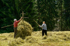 Peasants preparing hay for winter in Tatras mountains. . 5 July 2016, Zakopane, Poland. stock photography