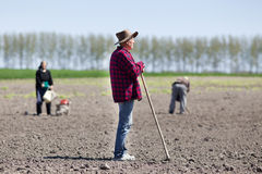 Peasants sowing on farmland Royalty Free Stock Photography