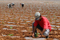 Peasants 024. Peasants working on agricole fields in the island of Majorca Royalty Free Stock Photo