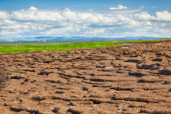Peat banks of river Kolyma Royalty Free Stock Image