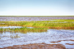 Peat banks of river Kolyma. Near Settlement Pokhodsk in Sakha Yakutia stock images