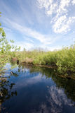 Peat bog. The picture shows a peat bog stock image