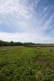 Peat bog. The picture shows a peat bog royalty free stock photos