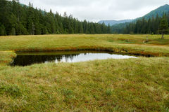 Peat bog in Romania Royalty Free Stock Photos