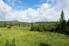 Peat bog in Bohemian Forest. Czech Republic stock images