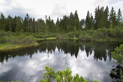 Peat bog in Bohemian Forest. Czech Republic royalty free stock photo