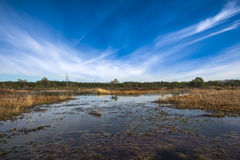 Peat bog, Estonia royalty free stock photo