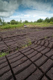 Peat bog field cultivation Royalty Free Stock Images