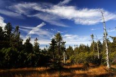 Peat-bog in Giant mountains. (Černohorské rašeliništ Stock Image