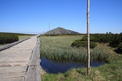 Peat bog at Giant mountains Stock Image