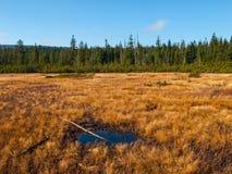 Peat bog of Jizera Mountains Royalty Free Stock Photo