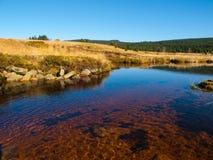 Peat bog of Jizera Mountains Royalty Free Stock Images
