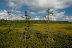 Peat-bog Stock Photo