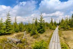 Peat bog in Krkonose national park Czech republic. Europe stock images