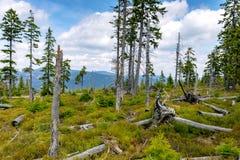 Peat bog in Krkonose national park Czech republic. Europe royalty free stock images