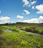 Peat bog  land Stock Photo