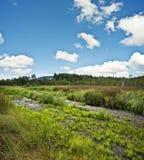 Peat Bog Land Stock Photo