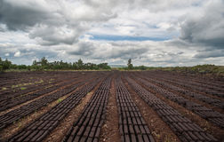Peat bog landscape. Landscape of peat bog bricks drying in a field Stock Photo
